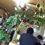 キッチングルメ味神戸 - 観葉植物