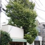 Ichounoki - いちょうの木