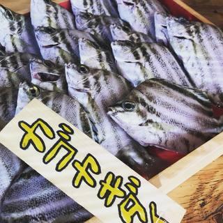 ★〈12月27日〉ボーダー柄の魚といえば!