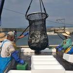 水揚げ地魚3種盛り