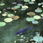 しげ吉 - モネの池
