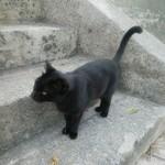 75859745 - 獲物を狙う地元の猫