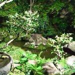 7586628 - 緑豊かな庭