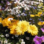7588459 - お庭に咲く花