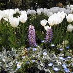 7588460 - お庭に咲く花