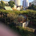 天神煎餅 大木屋 - 有名な藤棚