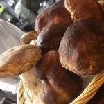 オステリア ラストリカート - 秋にはイタリアよりフレッシュポルチーニ茸