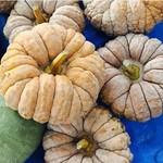 エツボ - かぼちゃも色々ありますね。