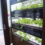 KAITEKI CAFE - 店内にはなんと植物工場が!