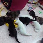 ニャイダーハウス - 猫ちゃんたちのランチタイム