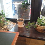 珈琲苑 - 窓側に観葉植物がさりげなく