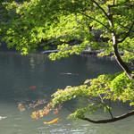 76391623 - 八芳園の池と紅葉