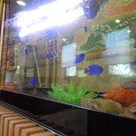 炭火焼工房 宝山 - 熱帯魚の水槽が、子供が気に入っています。