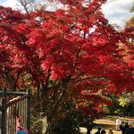 香住 - 山頂の紅葉