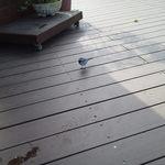 エフカイビーチ - 逃げない鳥