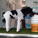 生クリーム専門店 Milk 新宿店 - 牛とソフトクリームの置物がさりげなく置かれてイイ!
