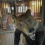 76666024 - 熊の剥製
