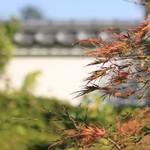 76681832 - お庭はお寺の壁に囲まれています