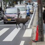 吉野本葛 天極堂 - 奈良公園前、赤信号でも渡れる鹿