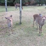 吉野本葛 天極堂 - 東大寺周辺、見つめないで~もう鹿せんべいはないの…