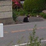 ドライブイン七輿 - 向かいの家からこちらを見ています 仔猫ちゃんでもいるのでしょうか?