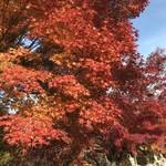 そば舎 あお - 紅葉が美しい