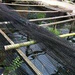 川魚料理 ますや - 川魚の養殖場に併設されています。