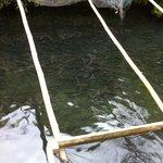 川魚料理 ますや - 釣りも出来ます。