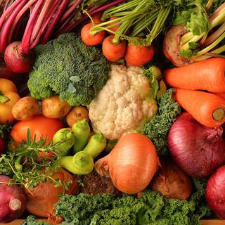 見た目も鮮やかなお野菜たち♪