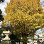 77201587 - 鳩森八幡神社さんの銀杏