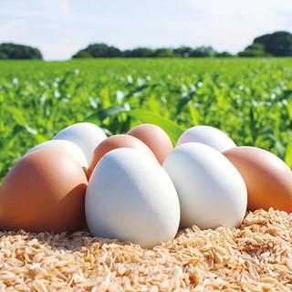 【東北牧場直送】新鮮な高級卵&完全無農薬野菜のお料理の数々