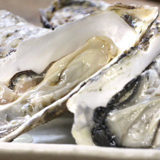 三陸産の新鮮プリプリ牡蠣!