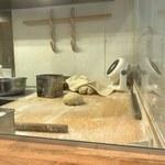 麺や 七彩 - 製麺所