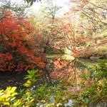 六義園 吹上茶屋 - 12月02日の見頃で美しい紅葉