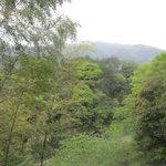 奥多摩釜めし - 窓辺から渓流がのぞめます