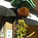 松井酒造 - 外観と杉玉