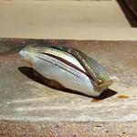 菊鮨 - ◆コハダ(天草)・・どちらかと言うと強めの〆加減ですが、良い味わい。