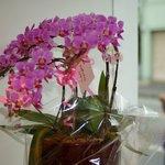 KURUMEジェラート - 祝開店のお花