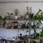 SOMA - 店内に飾られた観葉植物