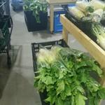 77743096 - 朝採れ野菜