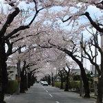 梅乃寿司 - 2011/05 お店の通りです。