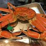 う越貞 - 間人の蟹(1.6kg)