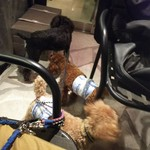 グッドモーニングカフェ - ペットはテラス席であればリードで可です♪