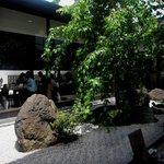 桜珈琲 - 中庭