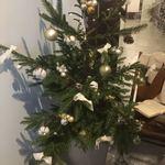 77976376 - クリスマス・ツリーが出迎えてくれます(*^^*)