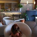 カフェ ベリーベリー - 入り口付近の席はペット同伴OK!!