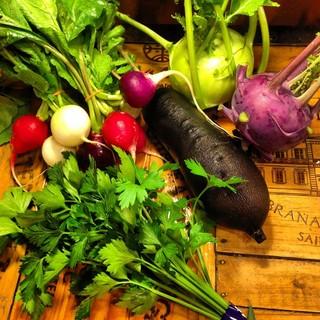 ミネラルたっぷり!豊かな土壌で育った三浦野菜