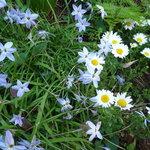 ジヴェルニー - お庭のお花。
