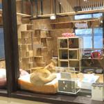 茶蔵 - お店の奥は、ガラス張りの猫シェルターになっています。