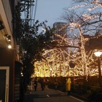 中目黒ひつじ - 12月後半はお店の前がイルミネーションで彩られます!桜の時期は満開の桜を目の前に!